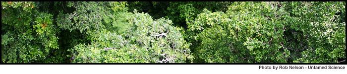 trees biome