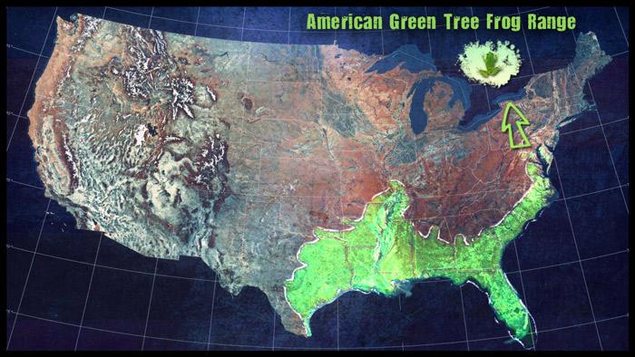 American-Green-tree-frog-map