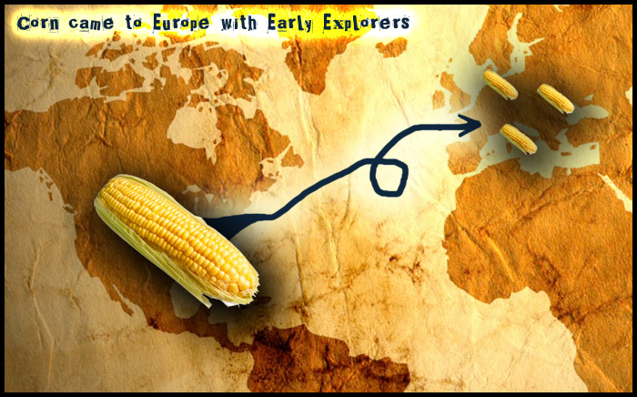 Corn-introduction---corn-diagram