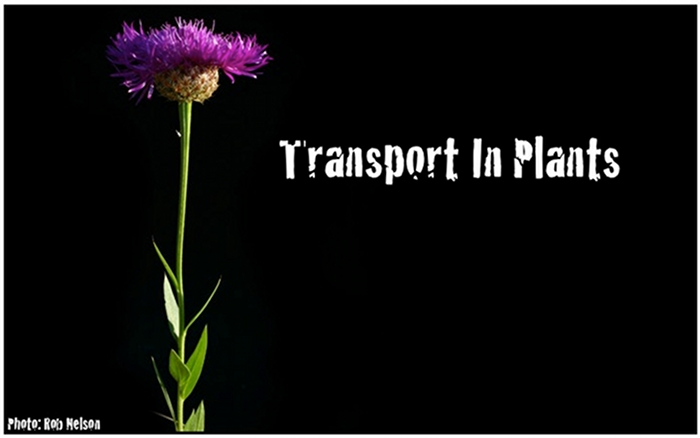 Transport-headerfinal2