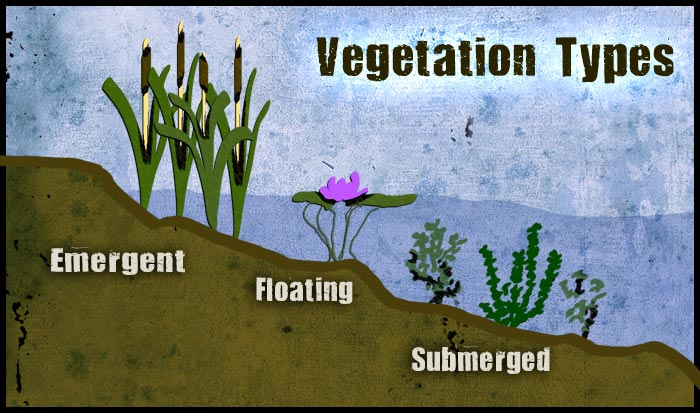 Vegetation-types