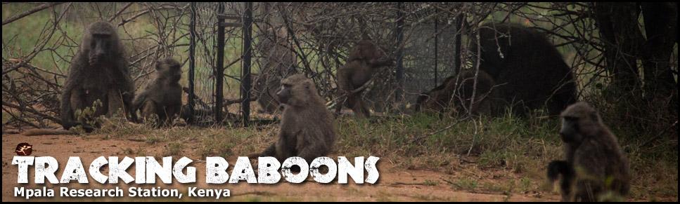 baboonrsch