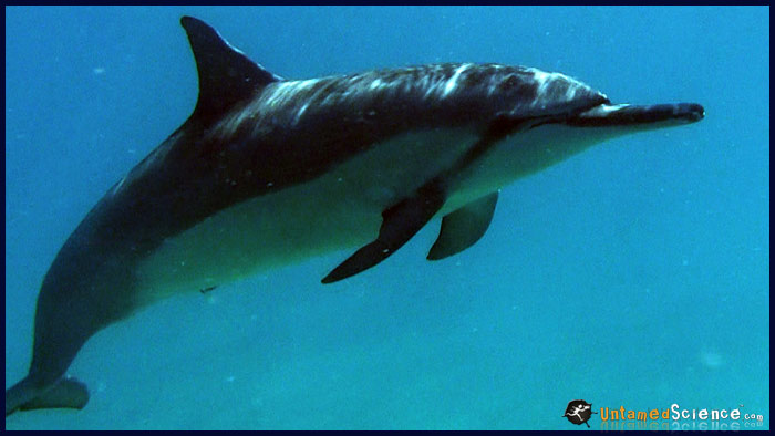 dolphins5
