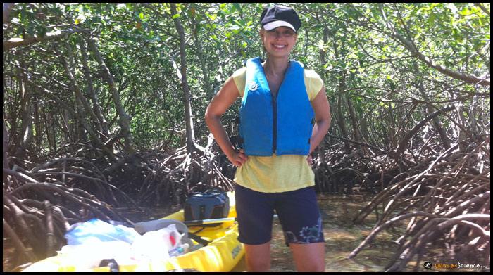 mangrove-kayaking2