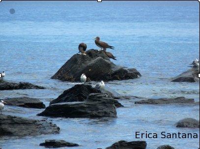 mixed-colony-birds-es