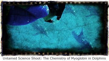 myoglobin-dolphins