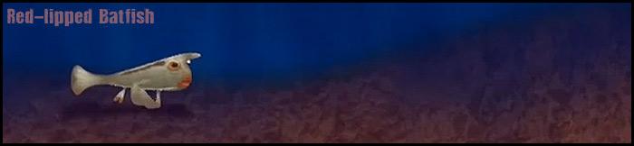 redlipped-batfish-long