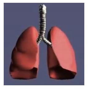 respiratory-system
