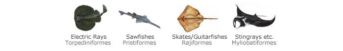 skates-orders