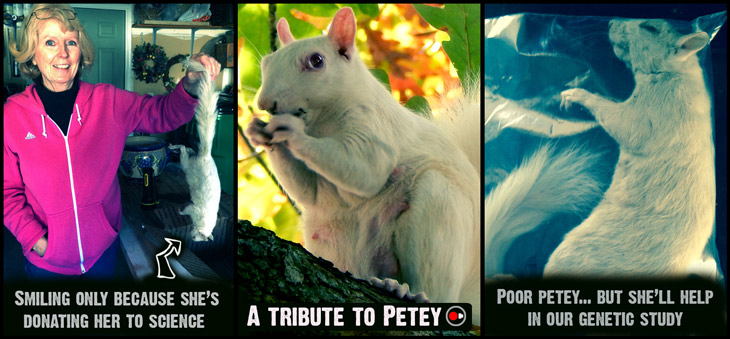 This is Petey, the albino white squirrel donated to our research initiative.