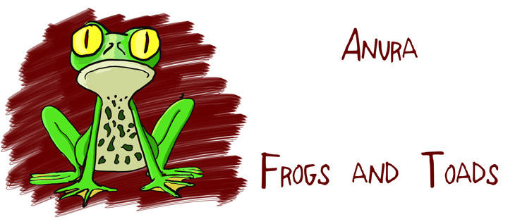 Frog Drawing - Rob Nelson
