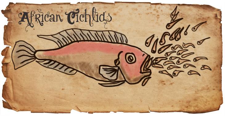 african-cichlid-mouth-brooder
