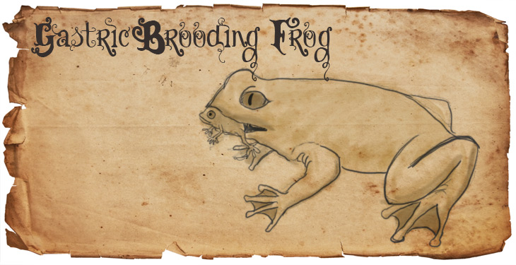 gastric-brooding frog