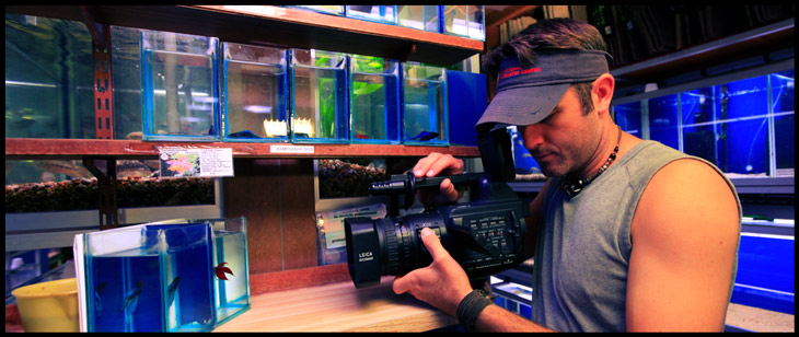 film-in-fish-store