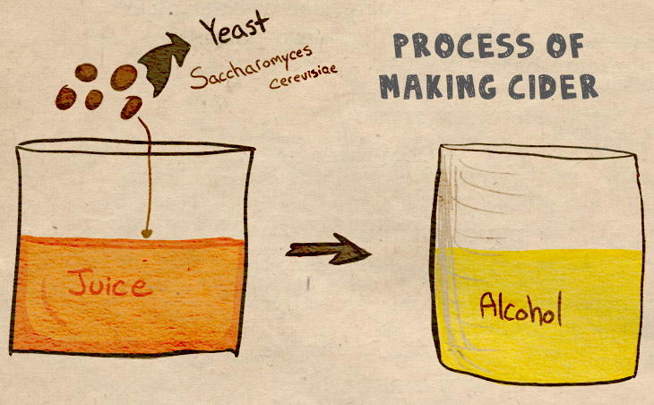 science of cider