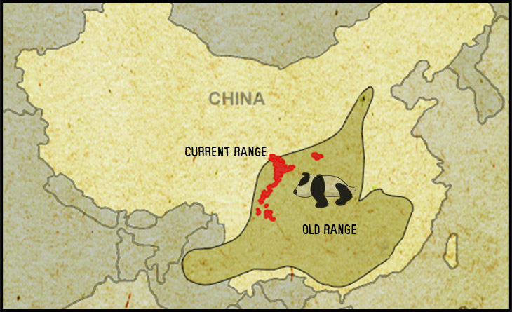 panda distribution and range map