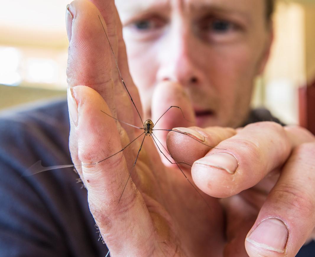 Jonas Stenstrom holding bug