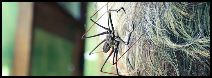 The tailless whip scorpion on the head