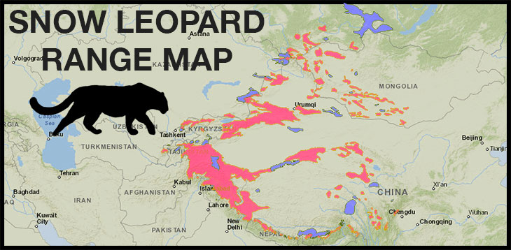 snow-leopard-range-map