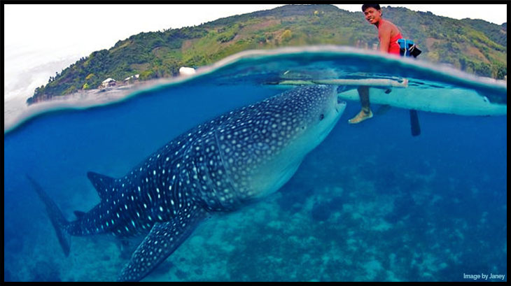 Whale Shark Untamed Science