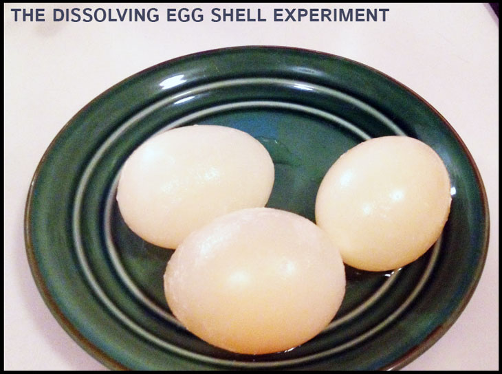 dissolving-egg-shell-experiment-4