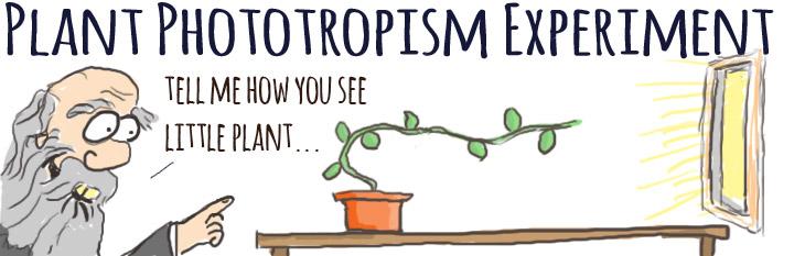 Darwin's Phototropism experiment cartoon