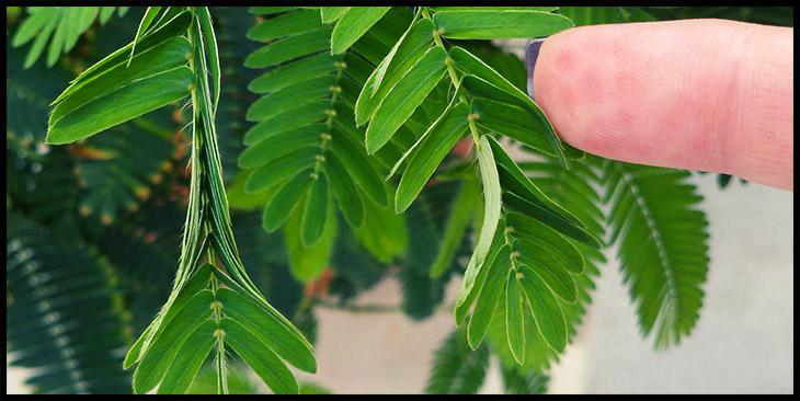 plant memory