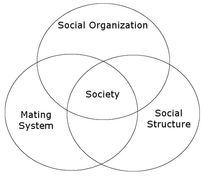 primate-social-organization