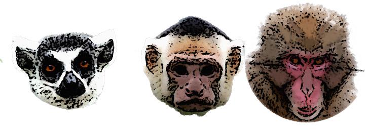 primates-comparison