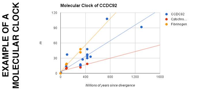 MOLECULAR-CLOCK