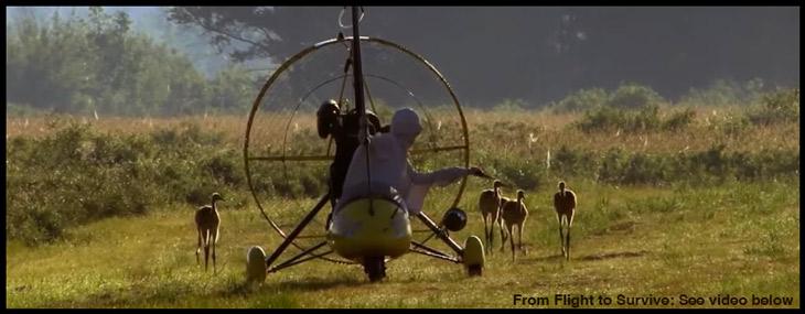 flight-to-survive