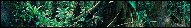 rainforest-scene
