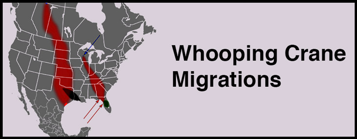 whooping-crane-migration-map