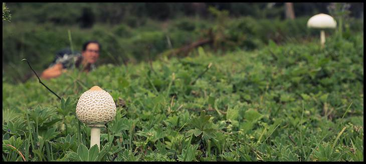 mushroom on mt kenya haley chamberlain