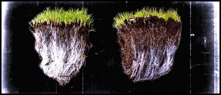 How do mycorrhizae work? Explained Simply