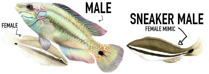 wrasse-sneaker-male-2