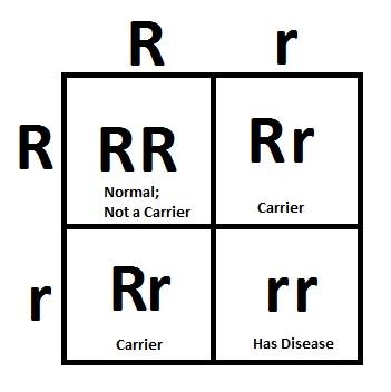 recessive-punnett-square