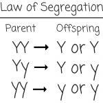 law-of-segregation