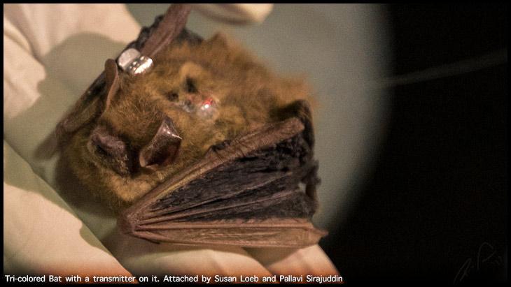 Bat Research 3